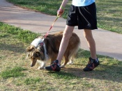 dog on leash